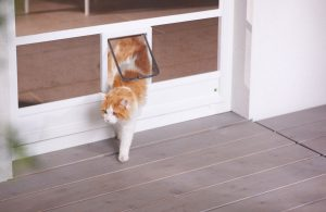Insektenschutz Drehtüre Katzenklappe
